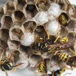 2020年5月30日 ハチの巣