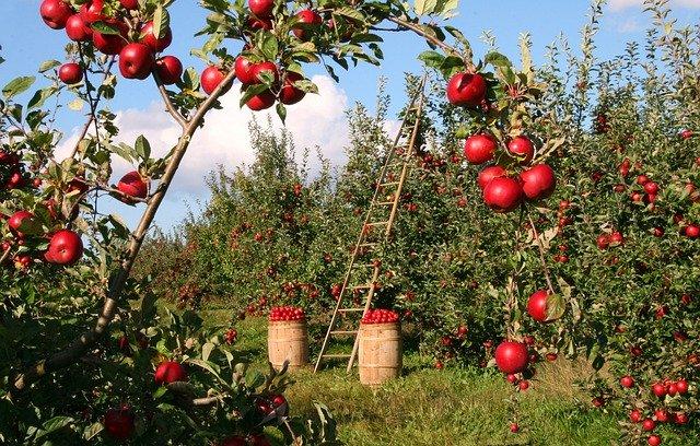 庭の家庭菜園で自然農法にチャレンジする