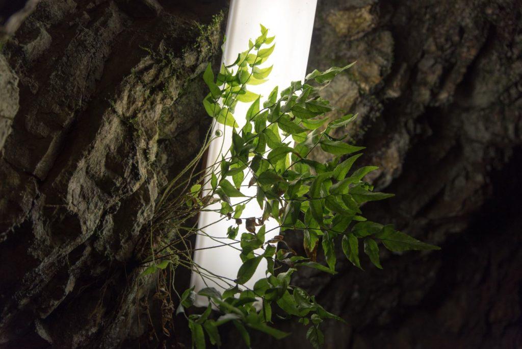 関ヶ原鍾乳洞 植物