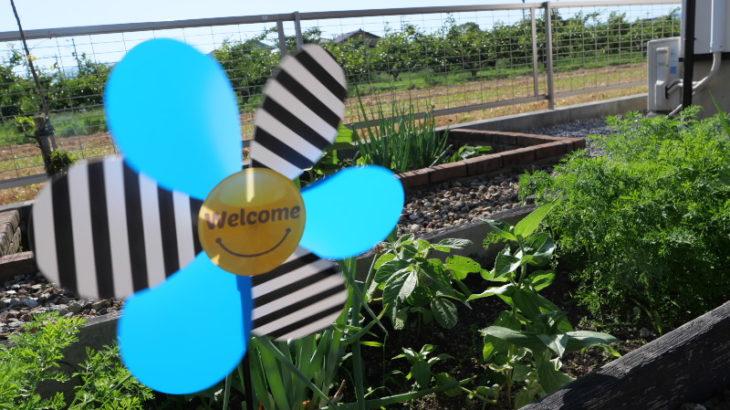 庭の家庭菜園で自然農法にチャレンジ 5月
