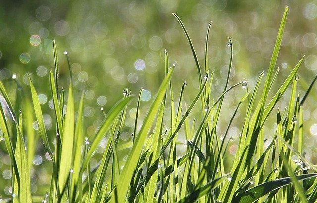 2020年6月22日 庭の草抜き
